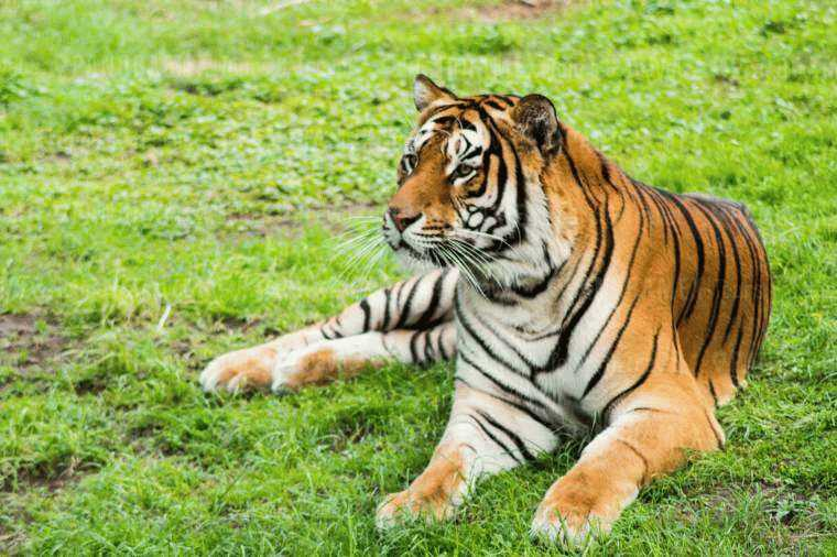 guadalajara-zoo