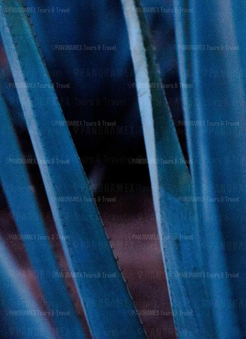 jose cuervo express agave azul