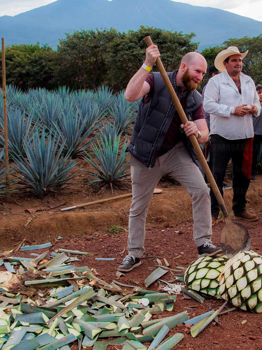 tequila jalisco jimador en recorrido campos de agave
